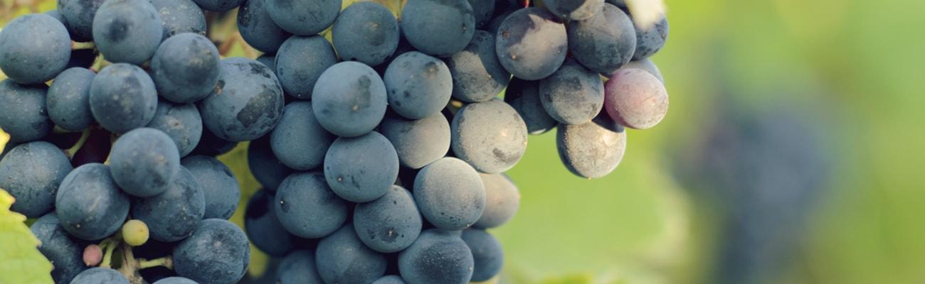 1300-raisins-min